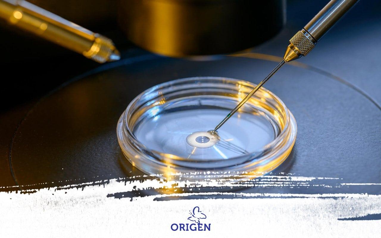 FIV – Fertilização in vitro