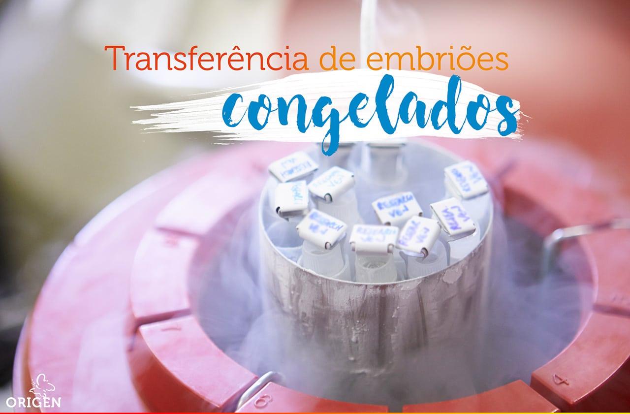 Quais as taxas de sucesso da transferência de embriões congelados?