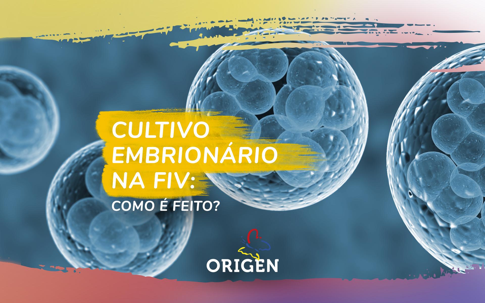 Cultivo embrionário na FIV: como é feito?