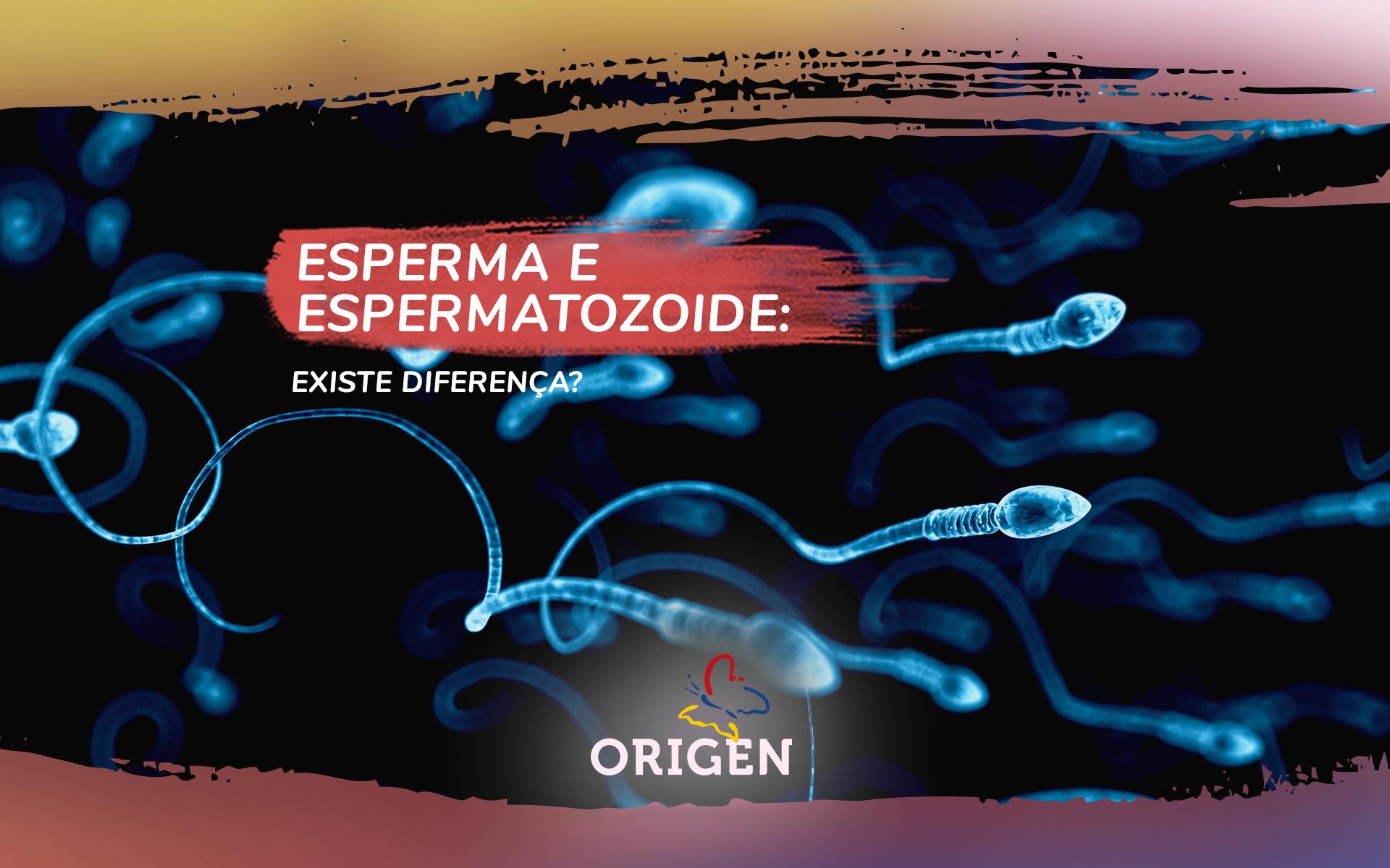 Esperma e espermatozoide: existe diferença?